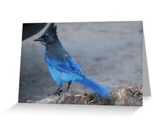 Dressed in Blue Greeting Card