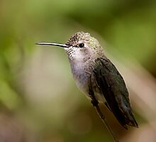 Hummer Portrait by Daniel J. McCauley IV