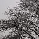 snowmageddon by DarylE