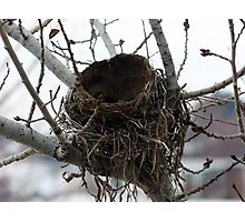 Empty Nest Photographic Print