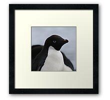Adelie Penguin Antarctica 1 Framed Print