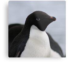 Adelie Penguin Antarctica 1 Metal Print