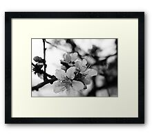 silence in black in white Framed Print