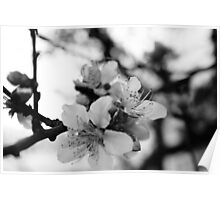silence in black in white Poster