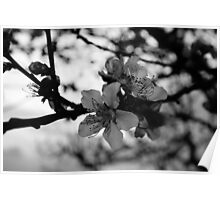 beautiful black and white flower Poster
