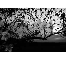 Black and White tree flower Photographic Print