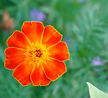 Bursts of red and orange by idigscarykids