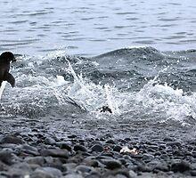 Adelie Penguins Antarctica 2B by Janai-Ami