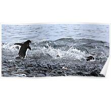Adelie Penguins Antarctica 2B Poster