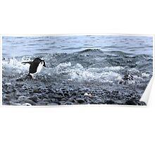 Adelie Penguins Antarctica 2C Poster