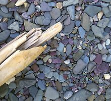 Rocks & Driftwood by Mike Norton
