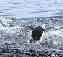 Adelie Penguins Antarctica Prepare for a Swim 2D by Janai-Ami