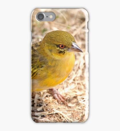 Yellow-fronted Canary, Serengeti National Park, Tanzania  iPhone Case/Skin