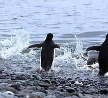 Adelie Penguins Antarctica 2E by Janai-Ami