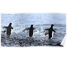 Adelie Penguins Antarctica 2E Poster