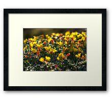 SpringFlowers_6242 Framed Print