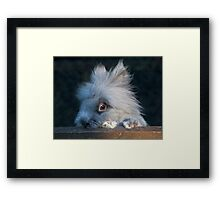 Is the coast clear yet? Framed Print