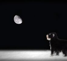 Sophie in the Moonlight by Dyle Warren