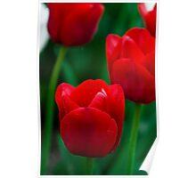 Ile de France Tulips Poster