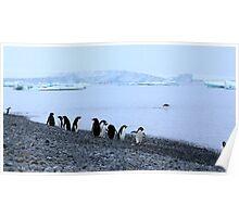 Adelie Penguins Antarctica 7 Poster