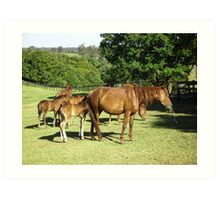 Brumby Mares & Their Foals. Art Print