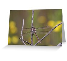 Giant Dragonfly Greeting Card