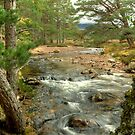 Allt Druidh In The Rothiemurchus Forest by VoluntaryRanger