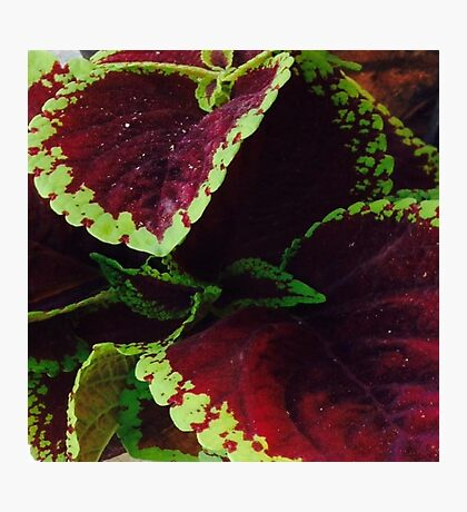 leaf me purple Photographic Print