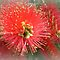 *Avatar/Colours of Christmas - Gorgeous Flower Cards*