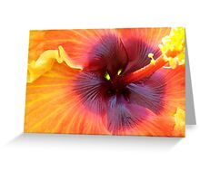 Hibiscus with Yellow Eyes Greeting Card