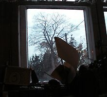 Tree from window by Antanas
