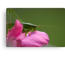 """Green Brush Grasshopper"" Canvas Print"