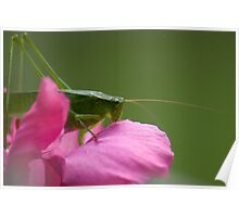 """Green Brush Grasshopper"" Poster"