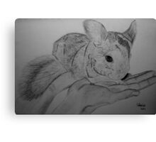 Chinchilla Canvas Print