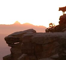 Sunset Dog-Climbing Cliffs in Tucson by Tanayri