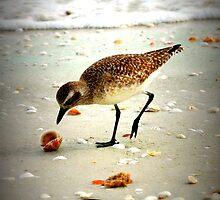 Seaside dinner by NEmens