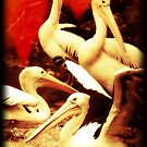 Pelicans in Red  by maureenclark