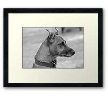 On High Alert Framed Print