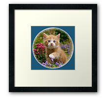 Cute ginger kitten in a garden Framed Print