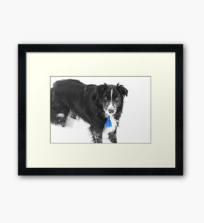 Arthur out for a bit of fun in the snow Framed Print