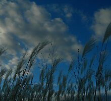 grass against fall sky by Matte Downey
