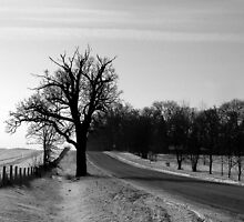 Scraggly Tree in the Countryside by Brian Gaynor