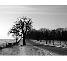 Scraggly Tree in the Countryside Photographic Print