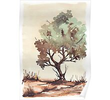 The lonely Black Wattle Poster