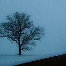 Two Trees on the Edge by swaby