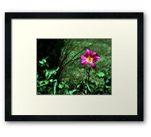 Color Delight Framed Print
