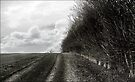 Hitchin Hedgerow by MoGeoPhoto