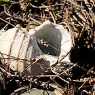 Old Shell by Debbie  Roberts
