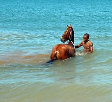 Horse Enters the Carribean by Memaa