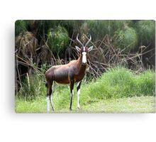 """Blesbok- Woodlands South Africa"" Metal Print"